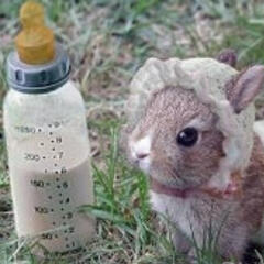 兔兔bunny7