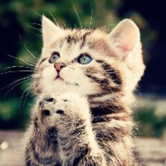 心灵手巧的小猫