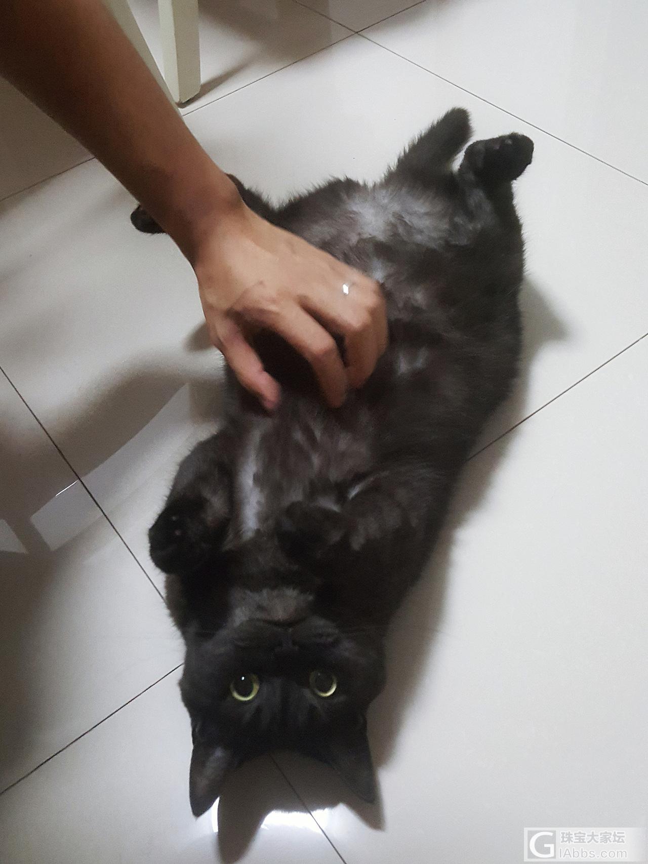 拉主子出来秀秀_猫