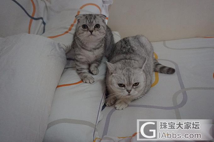 恭候大驾_猫