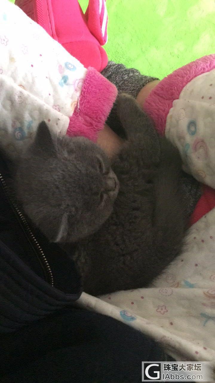 我家包子是屌丝_猫